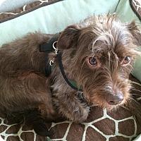 Adopt A Pet :: Crosby - San Francisco, CA