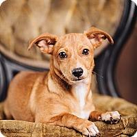 Adopt A Pet :: Cherie - Portland, OR