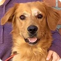 Adopt A Pet :: EVAN (video) - Los Angeles, CA