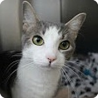 Adopt A Pet :: Ember - Chesapeake, VA