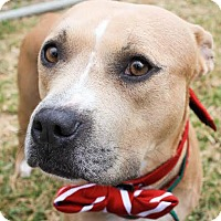 Adopt A Pet :: Honesty - Fort Collins, CO