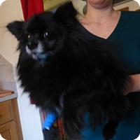 Adopt A Pet :: Dymond-pending adoption - Glastonbury, CT