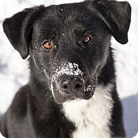 Adopt A Pet :: Brenin - Winnipeg, MB