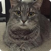 Adopt A Pet :: Lena - Richmond, VA