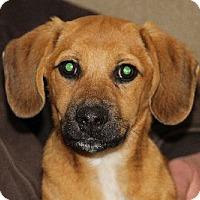 Adopt A Pet :: Hero - Avon, NY