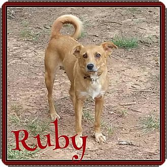 Australian Shepherd Mix Dog for adoption in Waxhaw, North Carolina - Ruby
