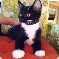 Adopt A Pet :: Grillo - Orange, CA