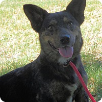 Adopt A Pet :: Owen - Turlock, CA