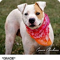 Adopt A Pet :: Gracie - ADOPTED! - Zanesville, OH