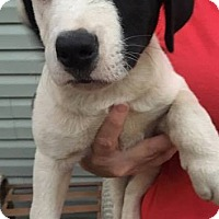 """Adopt A Pet :: The """"A"""" Litter - Forked River, NJ"""