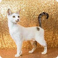 Adopt A Pet :: *MARSHMALLOW - Orlando, FL