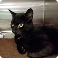 Adopt A Pet :: Arnold - Elyria, OH