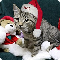 Adopt A Pet :: Meg - Rochester, NY