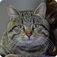 Adopt A Pet :: Lucky - Ottumwa, IA