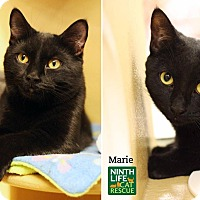 Adopt A Pet :: Donny & Marie - Oakville, ON