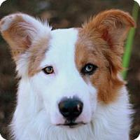 Adopt A Pet :: Buckner - ADOPTION IN PROGRESS - Danbury, CT