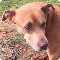 Adopt A Pet :: Roxie - Monroe, NC
