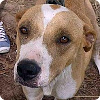 Terrier (Unknown Type, Medium) Mix Dog for adoption in Tyler, Texas - A-Lucy