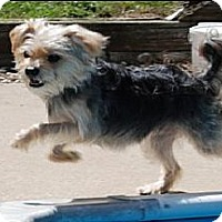 Adopt A Pet :: LEVI - Palmyra, WI