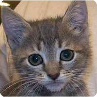 Adopt A Pet :: Wonton - Annapolis, MD