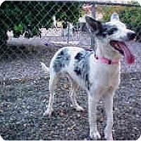 Adopt A Pet :: Fallon - Mesa, AZ