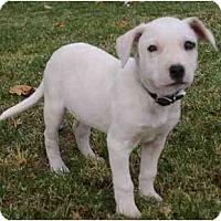 Adopt A Pet :: Venice - Gilbert, AZ