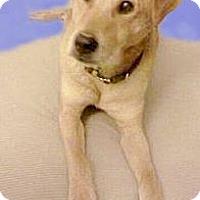 Adopt A Pet :: Jake happy boy - Sacramento, CA