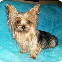 Adopt A Pet :: Noelle - Mooy, AL