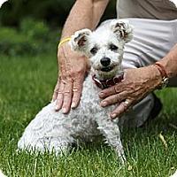 Adopt A Pet :: Josie - Rigaud, QC