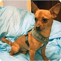 Adopt A Pet :: Miguel - Mooy, AL