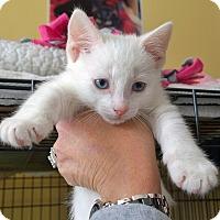 Adopt A Pet :: Dash - Island Park, NY