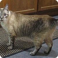 Adopt A Pet :: Miss Daisy(Lynx-point/Siamese) - Witter, AR