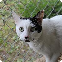 Adopt A Pet :: Fancy - Pittsburg, KS