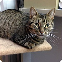 Adopt A Pet :: Harmony - Hamilton, ON