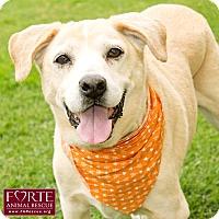 Adopt A Pet :: Callahan - Marina del Rey, CA