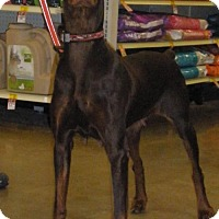 Adopt A Pet :: Sadie - Omaha, NE