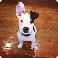 Adopt A Pet :: Gabe - Atlanta, GA