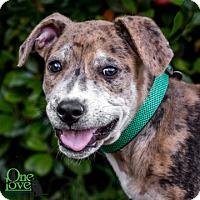 Adopt A Pet :: Viktor - Savannah, GA