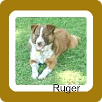 Border Collie Mix Dog for adoption in Malvern, Arkansas - RUGAR