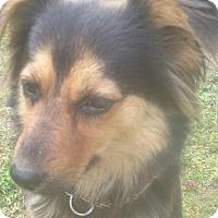 Adopt A Pet :: Happy - Staunton, VA