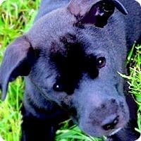 Adopt A Pet :: WINNIE(GENTLE-LOVING PUPPY) - Wakefield, RI