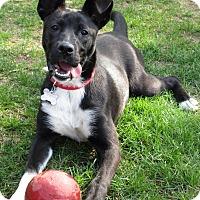 Adopt A Pet :: Lulu - Adopted! - Ascutney, VT