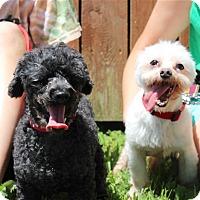Adopt A Pet :: Mature and Precious - Elyria, OH