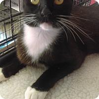 Adopt A Pet :: Meadow - Lancaster, CA