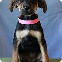 Adopt A Pet :: Dory - Waldorf, MD