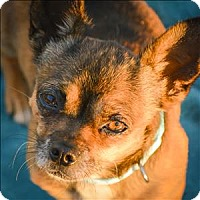 Adopt A Pet :: Konki - Vallejo, CA