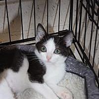 Adopt A Pet :: Bernice - Louisville, KY