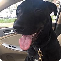 Adopt A Pet :: Blake - Custer, WA