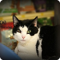 Adopt A Pet :: Chloe - Springfield, PA