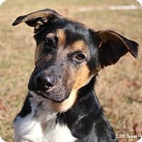 Adopt A Pet :: Jake - Bedford, VA